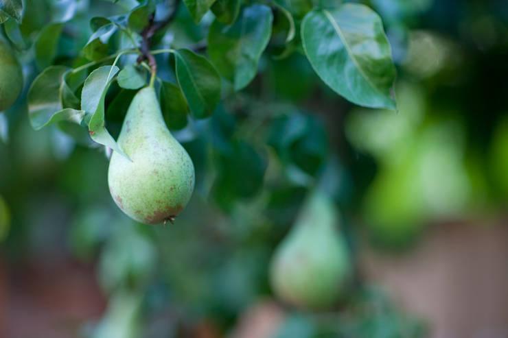 Hollandse peren:  Tuin door Mocking Hoveniers