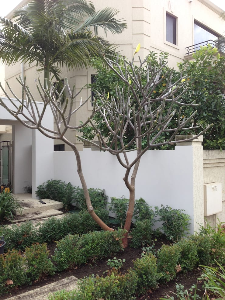 Applecross:  Garden by Project Artichoke