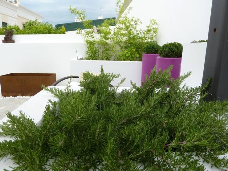 Terrazas  de estilo  por Ángel Méndez, Arquitectura y Paisajismo
