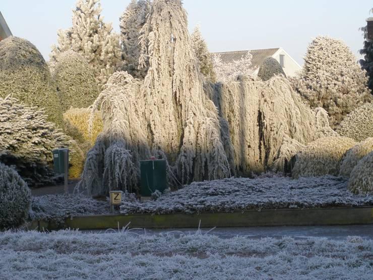 Voorbeeld:  Tuin door Herman Geers dwerg & miniatuurplanten, Klassiek
