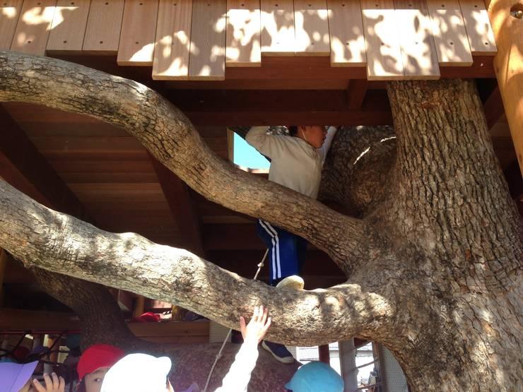 木登り: 株式会社フィンオールが手掛けた庭です。