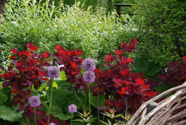 Kleur en vorm:  Tuin door Ontwerpstudio Angela's Tuinen