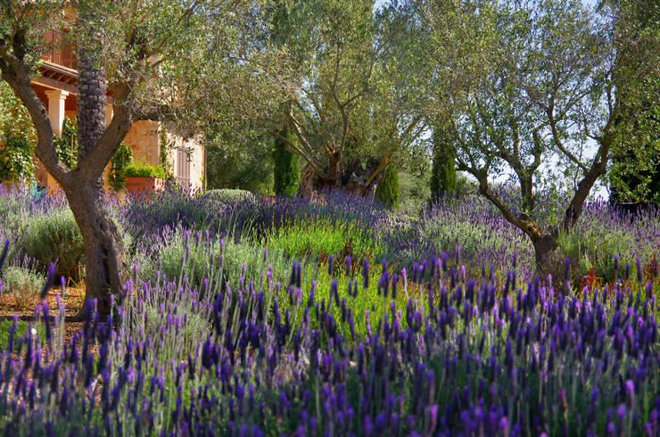 Сады в . Автор – Viveros Pou Nou