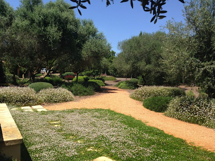 Jardins mediterrânicos por Viveros Pou Nou