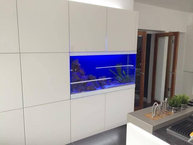 moderne Küche von DC Aquariums