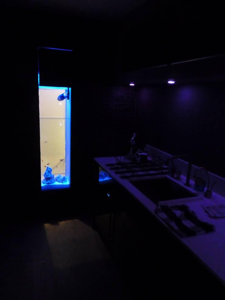 Kitchen Aquarium, Edinburgh:  Kitchen by DC Aquariums, Modern