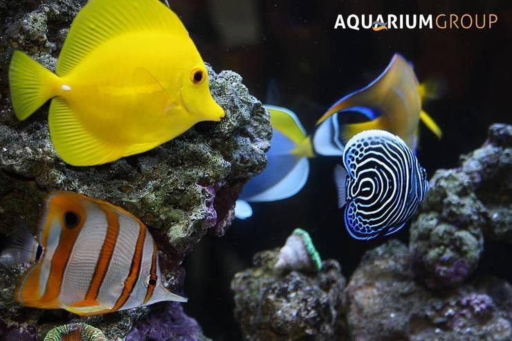 AquariumGroupが手掛けたキッチン