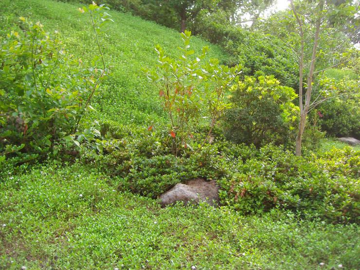 自然の野原の様相: 新美園が手掛けた庭です。