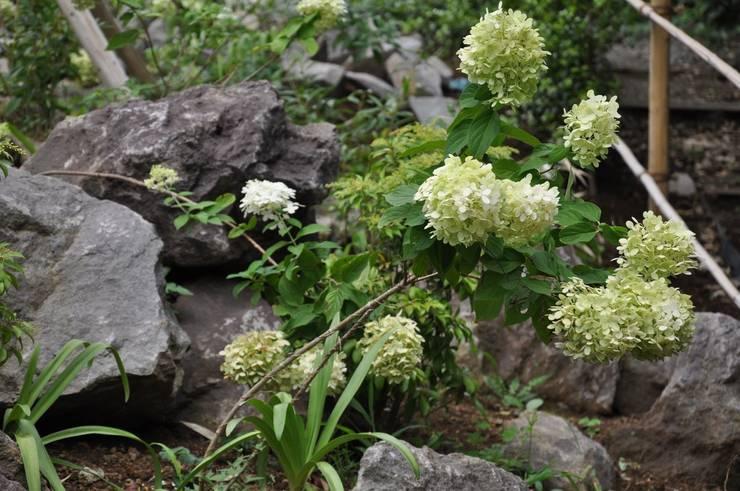 ノリウツギ: 有限会社 温室が手掛けた庭です。