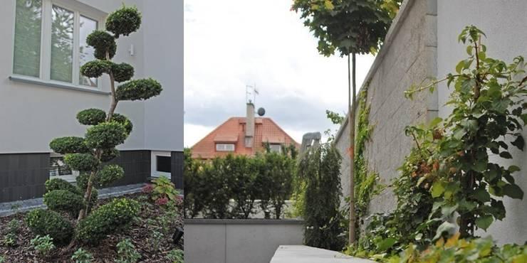 bonsai jest głównym akcentem w części frontowej: styl , w kategorii  zaprojektowany przez Autorska Pracownia Architektury Krajobrazu Jardin