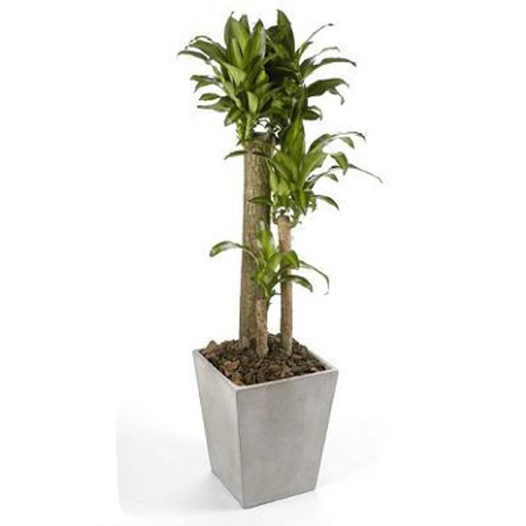 de estilo tropical por Flores & Regalos Tu jardin , Tropical Fibra natural Beige