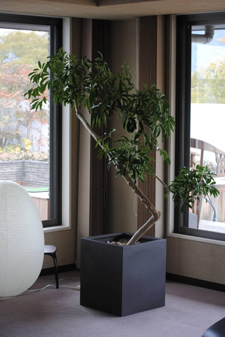 インテリアグリーン  ホンコン: スタイル・モダンが手掛けたリビングルームです。