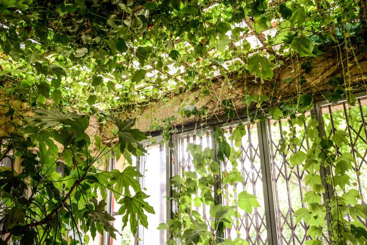 Jardines de invierno de estilo  de Ginkgo Giardini