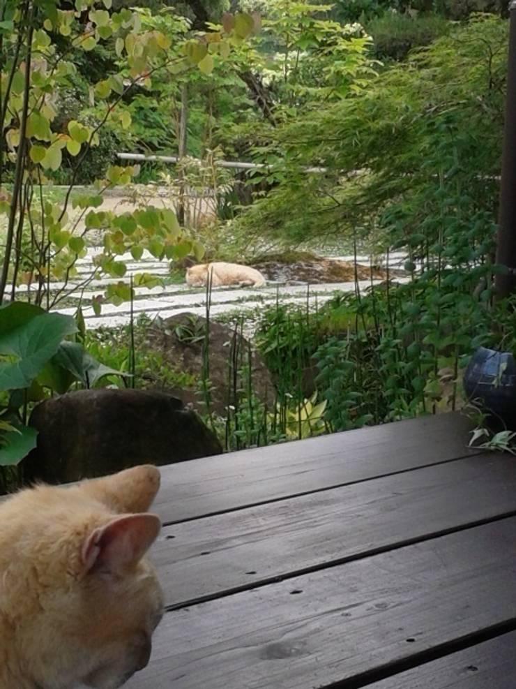 猫のいる庭: ヒグラシ園藝店が手掛けた庭です。