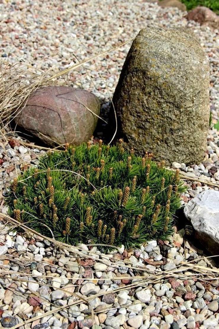 Miniaturowa sosna płożąca: styl , w kategorii  zaprojektowany przez Garden Ekspert Studio Architektury Krajobrazu