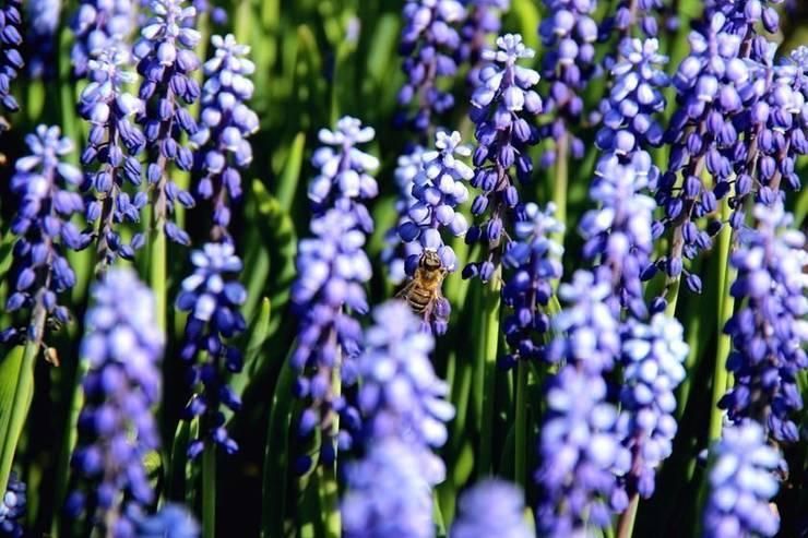 Pszczoła: styl , w kategorii  zaprojektowany przez Garden Ekspert Studio Architektury Krajobrazu