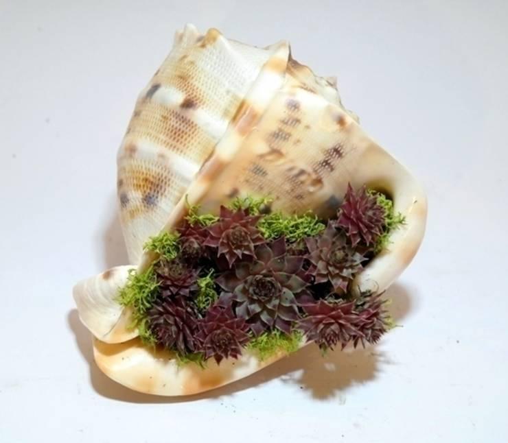 bitki dekor – Deniz kabuğunda sempervivum:  tarz Bahçe
