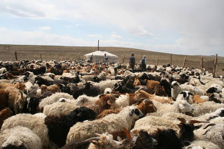 Filzschuhe aus Mongolei:   door esgii