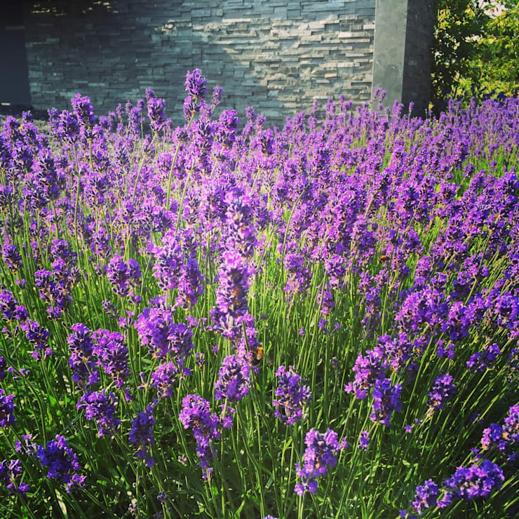 Kleur in de tuin:  Tuin door Biesot