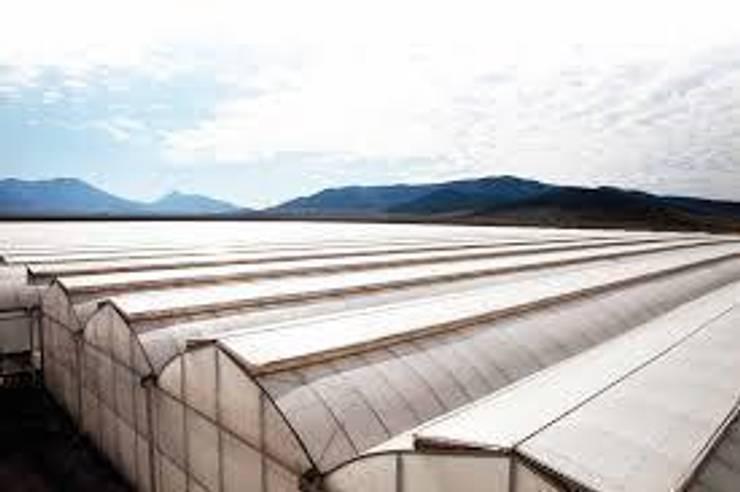 Invernadero : Centros de exhibiciones de estilo  por Serretek, Industrial