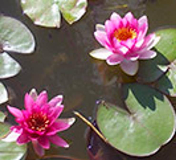 nenufares  : Jardines de estilo topical por Water Life S.A