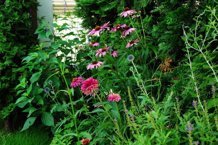 garden M5: 山越健造デザインスタジオ Kenzo Yamakoshi Design Studioが手掛けた庭です。
