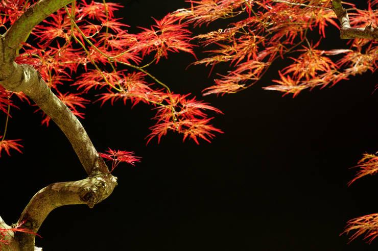 garden M8: 山越健造デザインスタジオ Kenzo Yamakoshi Design Studioが手掛けた庭です。