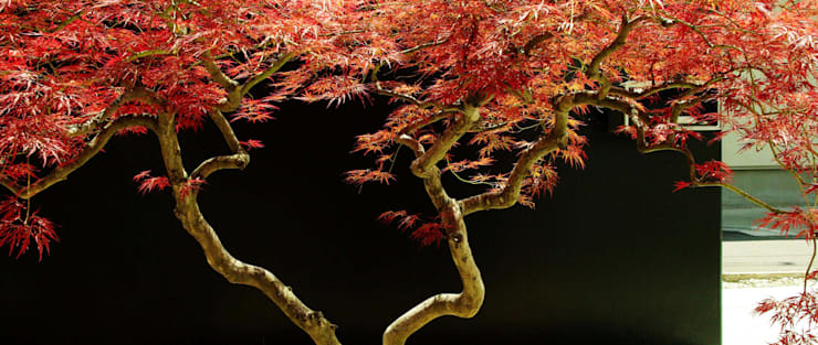garden M9: 山越健造デザインスタジオ Kenzo Yamakoshi Design Studioが手掛けた庭です。