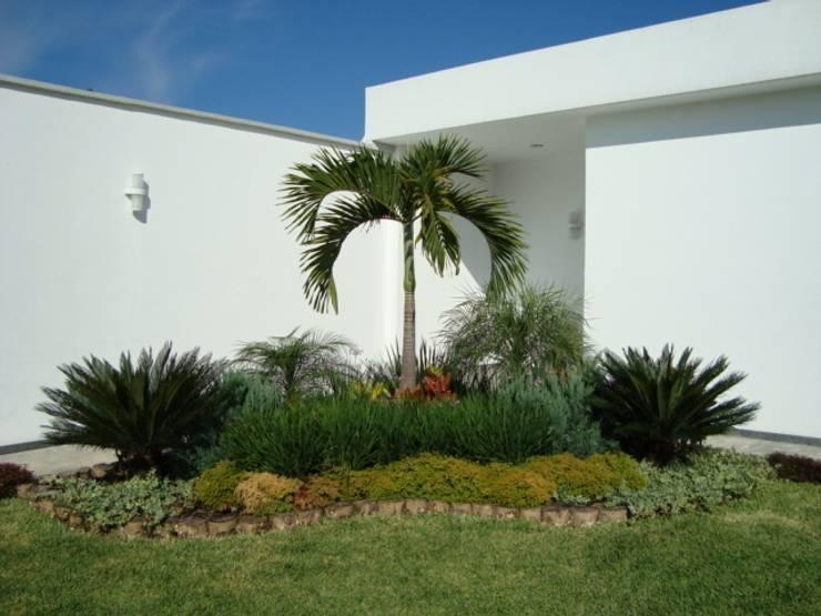 Palma Kerpis Jardines de estilo tropical de Vivero Sofia Tropical