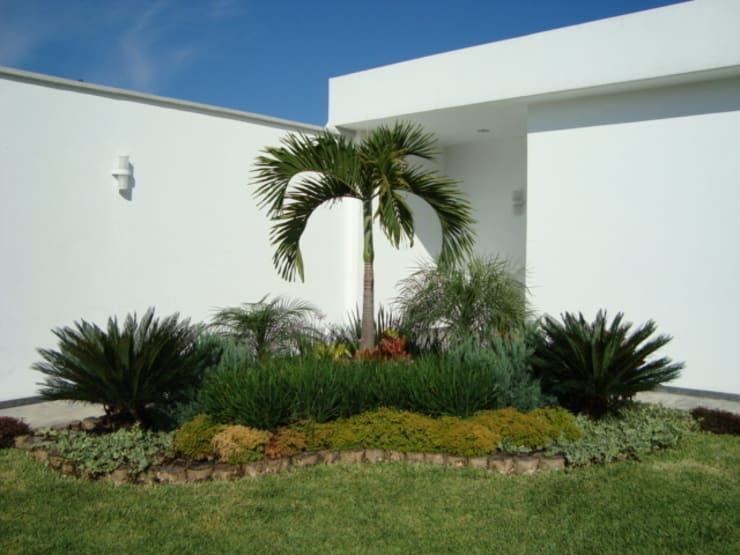 Palma Kerpis Jardines tropicales de Vivero Sofia Tropical