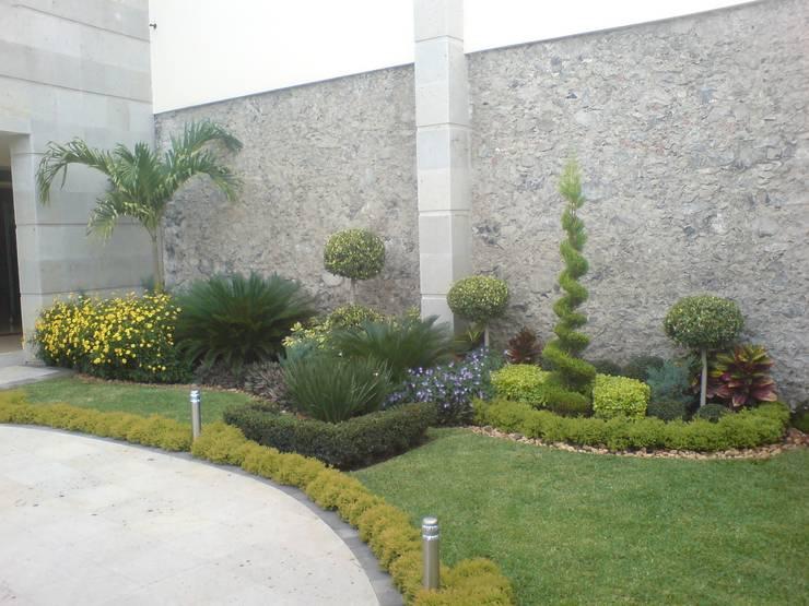Jardín irregular con palmeras y topiarios: Jardines de estilo  por Vivero Sofia