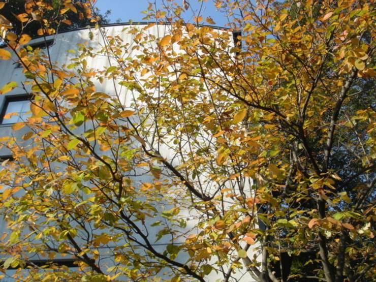 ジューンベリーの紅葉: MA設計室が手掛けた家です。,