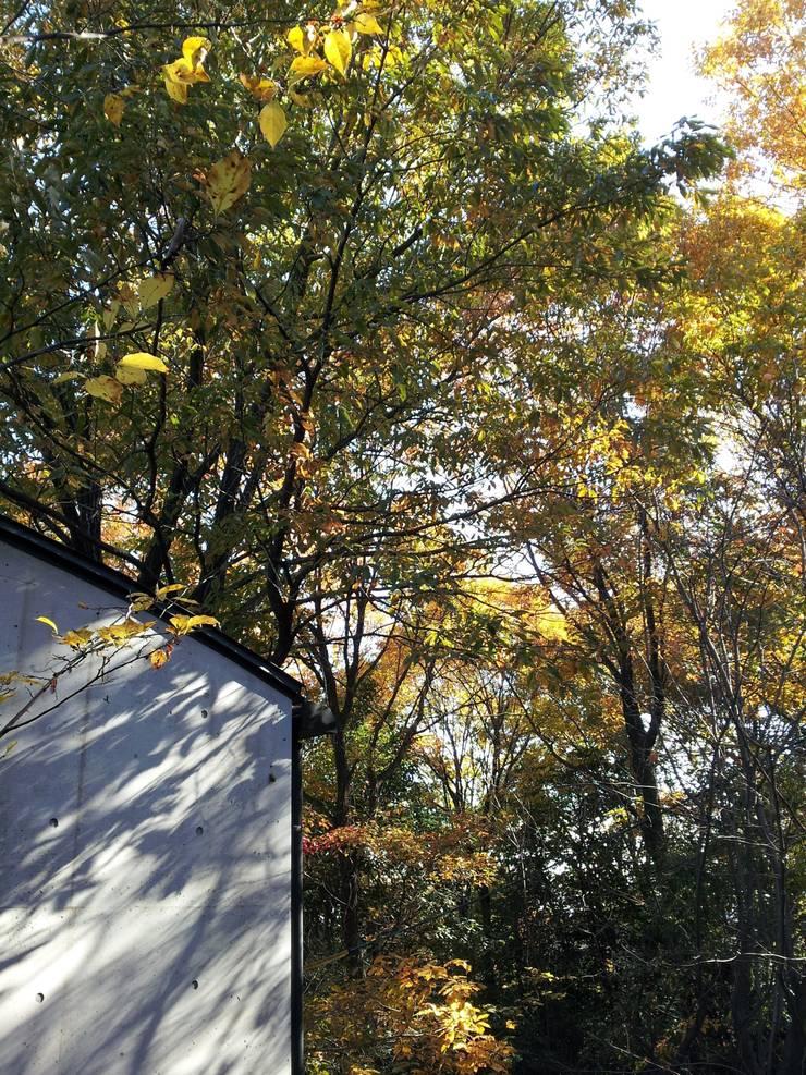 中庭から(秋): MA設計室が手掛けた庭です。,
