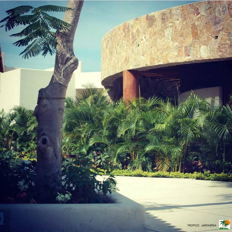 JARDINES TROPICALES: Jardines de estilo  por Tropico Jardineria