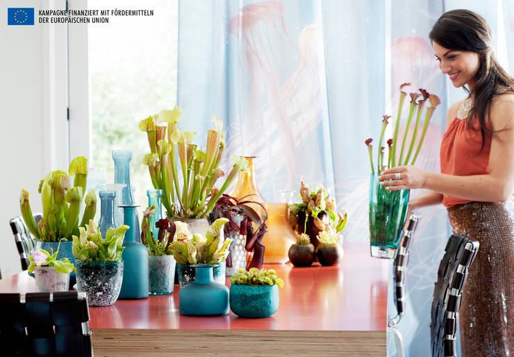 Die fleischfressenden Pflanzen sind Zimmerpflanzen des Monats September:  Wohnzimmer von Pflanzenfreude.de