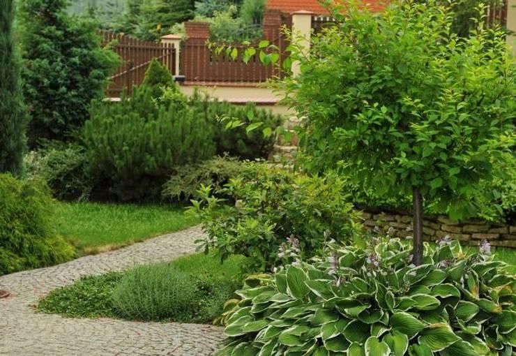 Ogród zimowy: styl , w kategorii Ogród zaprojektowany przez Pracownia Projektowa Architektury Krajobrazu Januszówka,Klasyczny