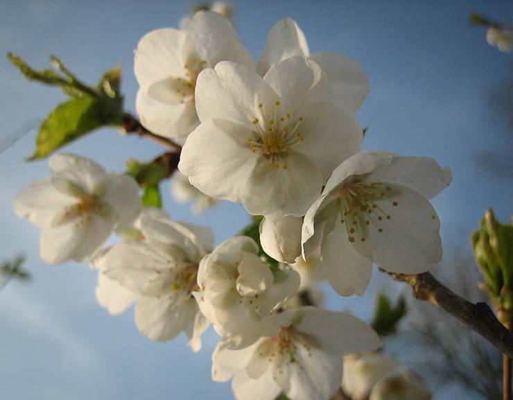 Fruitbomen:  Tuin door Boekel Tuinen