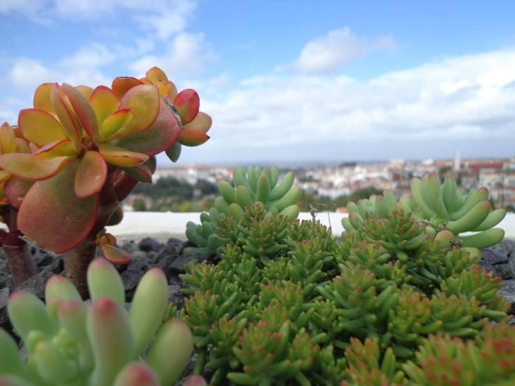 Cumeada: Jardins  por Consigo Interiores