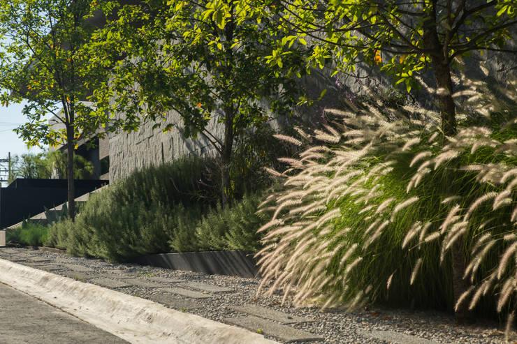 Jardines de estilo moderno por HARARI LANDSCAPE