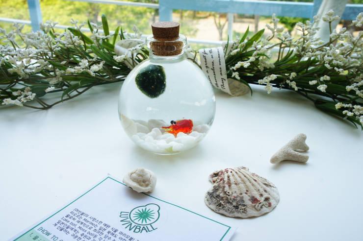 Marimoball Terrarium(사랑스런 애완식물 마리모볼): luvinball의  가정 용품,