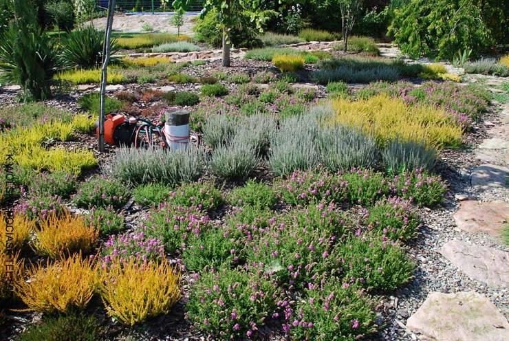 Wrzosowisko w drugim roku: styl , w kategorii Ogród zaprojektowany przez Centrum ogrodnicze Ogrody ResGal,