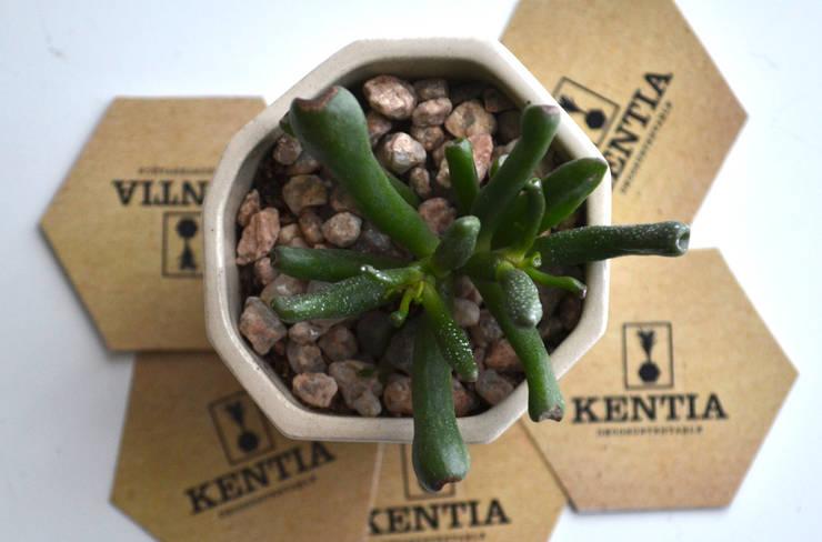 Suculentas en maceta de cerámica: Hogar de estilo  por Kentia Decosustentable