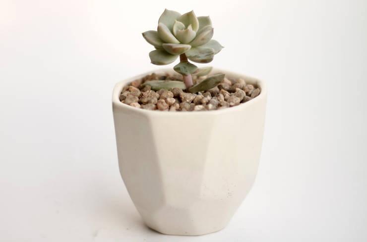 Suculenta en maceta de cerámica: Hogar de estilo  por Kentia Decosustentable