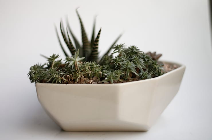 Paisaje en maceta de cerámica:  de estilo  por Kentia Decosustentable,Minimalista Cerámica