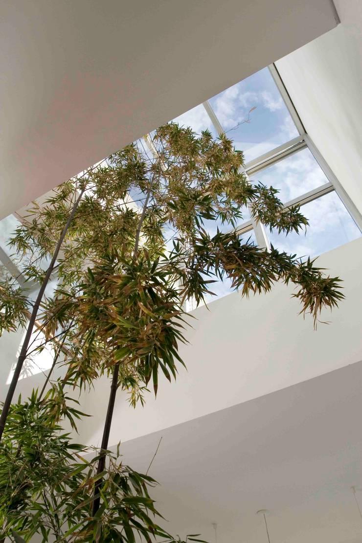 Casa RM: Pasillos y recibidores de estilo  por Remy Arquitectos