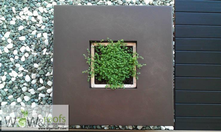 Jardins de inverno  por WGWRoofs - Мастерская зеленых стен и крыш