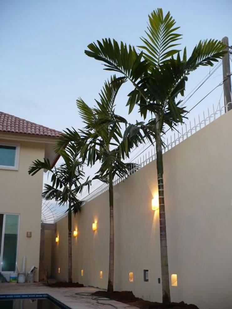 Árboles: Jardines de estilo  por Tropical America landscaping
