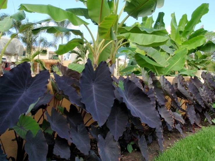 Macetas: Jardines de estilo  por Tropical America landscaping