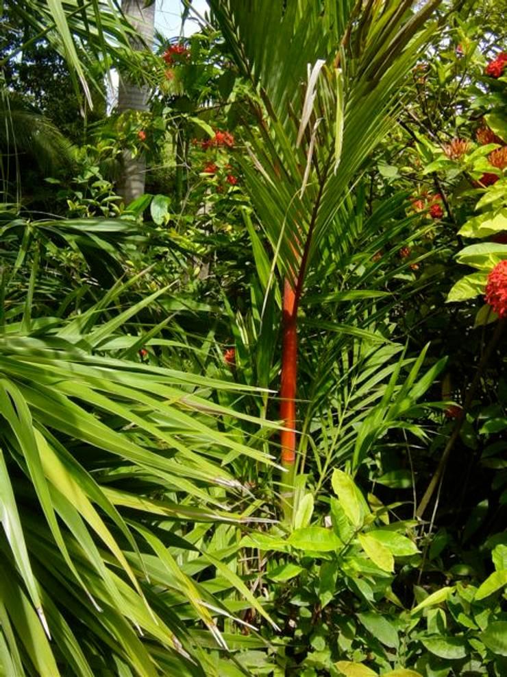 Plantas: Jardines de estilo  por Tropical America landscaping