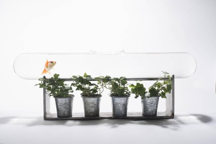 ligne de nage pour  Edmond le poisson rouge: Paysagisme d'intérieur de style  par Tabary Le Lay